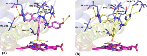 X-ray crystal structures of Ar3 analogues(a) 26a (PDB 5IBI) and (b) 26h (PDB 5IBH)in complex with CYP121. Both compounds closely recapitulated the bindingmode of lead 2. Ar3 substituents remained flexible, interactingonly with active site water molecules for 26a or formingnovel interactions with active site residues Ala75 and Asn74 for 26h. The omit Fo – Fc electron density maps of ligands 26a and 26h contoured to 3σ have been provided inSupporting Information Figure S5. Figuresprepared using PyMOL v1.7.4 (Schrödinger, LLC).