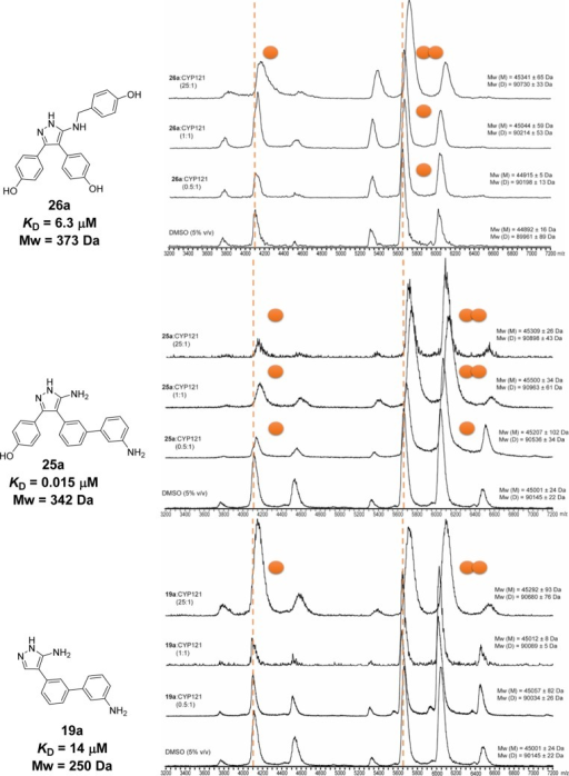 Representativenative mass spectra of CYP121 and selected compounds 26a, 25a, and 19a demonstrated thatcompounds formed stable complexes with both monomeric (m/z 5250–6750) and dimeric (m/z 5250–6750) CYP121. The number of boundligands (orange spheres) increased in a concentration-dependent mannerand was proportionate to the binding affinity (KD) of the compounds. Spectra were collected for CYP121 (8.7or 5 μM) at three different ligand-to-protein ratios (0.5:1,1:1, and 25:1) and in the presence of DMSO-d6 (2.2% or 5% v/v) alone. The concentration of protein or DMSO-d6 did not affect the quality of the spectraor ligand binding interactions, but higher concentrations of DMSO-d6 reduced the charge state of the protein. Ligandbinding stoichiometry was calculated from the difference in mass ofligand-bound and unbound (orange dashed lines) protein peaks dividedby the molecular weight of ligands (Table S1, Supporting Information).