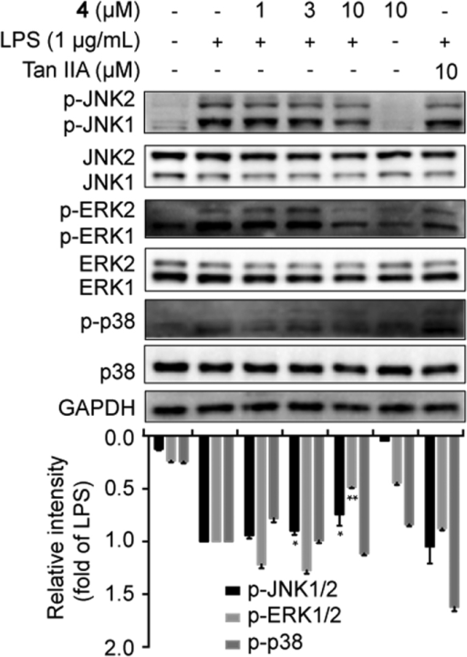MAPKs contributed to the anti-inflammatory activity of compound 4.Cells were pretreated with compound 4 as aforementioned. The protein expression was determined by Western blotting. Tan IIA, tanshinone IIA.