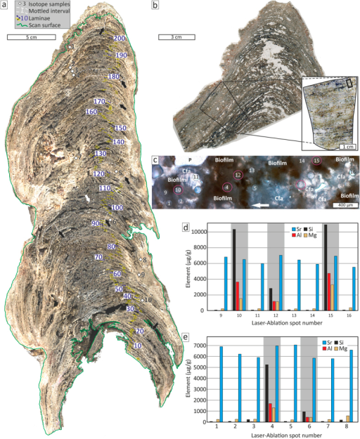 Laminae counting and elemental composition analysed with LA-ICP-MS.(a) Scan of epoxy impregnated, polished slab, highlighting individual 204 laminae and spots of isotope samples (1–10; see Supplementary Table S1); note mottled intervals (black arrows) sometimes lack distinct lamination; white arrow indicate overlapping of lamina #101; epoxy resin and unfilled porosity appear dark grey to black. (b) Thin-section scan of the build-up top displaying the relative position of the thin section used for LA-ICP-MS (inlet) and the actual ablation spots (black rectangle in the upper right of the blown-up section). (c) Thin section micrograph (plane-polarized light) displaying the LA-ICP-MS ablation craters within clotted and fibrous aragonite (Cfa) and fossilised biofilms (see also Supplementary Fig. S1); craters that yielded high aluminium (Al) contents are associated with biofilms (purple circles); arrow points towards the top. (d,e) bar diagrams showing element contents of LA-ICP-MS analyses; high strontium (Sr) contents agree with aragonite as dominant carbonate cement; spots with relative high contents of terrigenous aluminium (Al) are highlighted (grey bands); note that high silicon (Si) and magnesium (Mg) contents correlate with high Al contents.