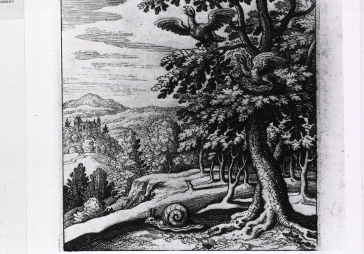 <p>Woodland scene showing a snail on the ground and two birds in a tree, one of which is sitting on a nest.</p>