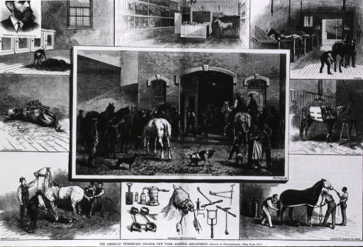 <p>The American Veterinary College, New York Hospital Department [10 vignettes of animals being treated and portrait of A. Liautard].</p>