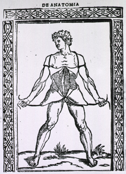 <p>Full length view of male figure with skin and flesh peeled back to reveal abdominal muscles.</p>