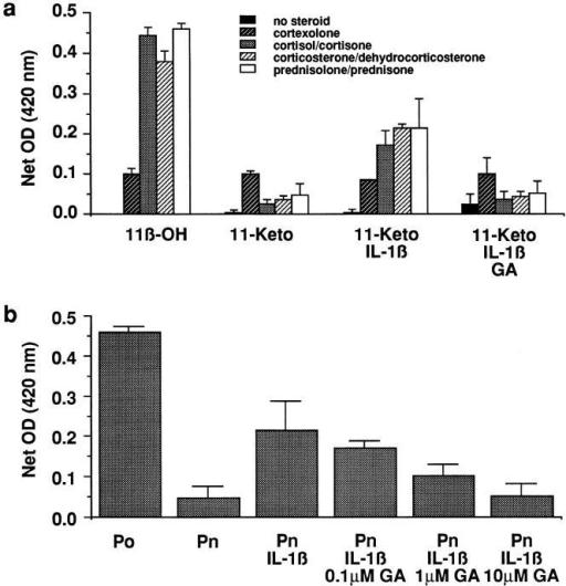steroids upregulate beta receptors