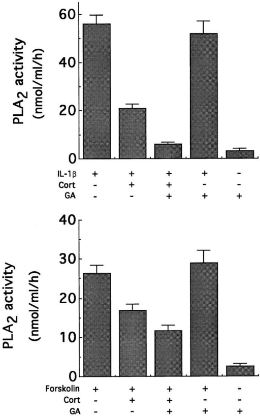 GA enhances the  ability of corticosterone (Cort) to  inhibit IL-1β– and forskolin– induced phospholipase (PLA2)  activity. (Top) GMC were incubated for 48 h with combinations  of IL-1β (5 nM), corticosterone  (50 nM), and glycyrrhetinic acid  (5 μM), and PLA2 assays were  performed. Results represent  the mean (± SD) of three assays.  (Bottom) Inhibition of group II  PLA2 enzyme activity in forskolin stimulated GMC. Each column represents the mean (± SD)  of three determinations. The inhibition of the enzyme activity  by corticosterone was enhanced  by the addition of GA.