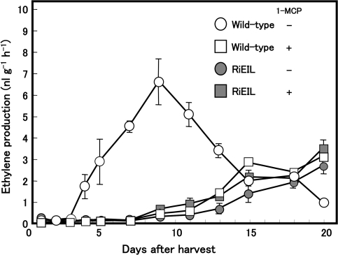 Changes in the rate of ethylene production in wild-type and RiEIL fruit. Tomato fruits were harvested 35 d after anthesis and continuously treated with (+) or without (–) 1-MCP. Vertical bars are the SE of three replications.