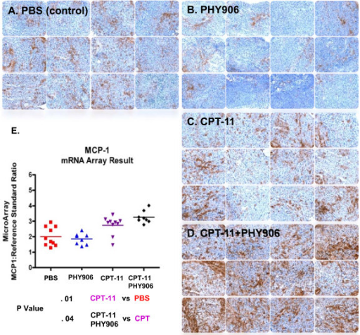 Macrophage infiltration signatures in tumors treated with PHY906 and/or CPT-11. Macrophage infiltration in colon 38 tumors treated with PBS (a), CPT-11 (b), PHY906 (c) or Ininotecan+PHY906 (d). MCP-1 RNA alteration in tumors induced by various treatments (e)