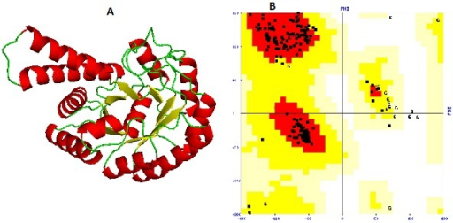 (A) The 3D model of fructose biphosphate aldolase; (B) The Ramachandran plot of modeled structure validated byPROCHECK program.