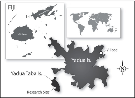 Location of Yadua and Yadua Taba Islands, Fiji, showing the village of Denimanu on Yadua and the research site on Yadua Taba.