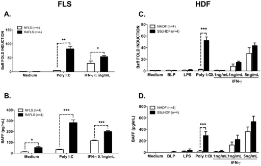 BAFF expression and secretion are up-regulated in Poly (I:C)- and IFN-γ-stimulated rheumatoid arthritis (RA) fibroblast-like synoviocytes (FLS) and systemic sclerosis (SSc) human dermal fibroblast (HDF).A, C. BAFF mRNA expression was determined by RT-qPCR in NFLS(n = 4) and RAFLS(n = 4) (A) or NHDF(n = 3) and SScHDF (n = 4) (C) stimulated (depending of the cell types) with BLP (1 µg/ml), LPS (1 µg/ml), Poly (I:C) (10 µg/mL) or IFN-γ (0.1, 1 or 5 ng/mL) for 72 h. Results were normalized to Gapdh and expressed as fold change compared with samples from cells incubated in medium. B, D. BAFF release was quantified by ELISA in culture supernatants of NFLS (n = 4) and RAFLS(n = 4) (B) or NHDF(n = 3) and SScHDF (n = 4) (D) in the same conditions as panels A and C. Data are expressed as the mean of triplicate samples ± SEM. *p<0.05, **p<0.01, ***p<0.001.