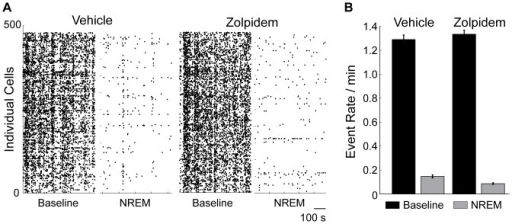 "Neuronal activity during Zolpidem-induced NREM sleep was lower than neuronal activity during physiological NREM.A: Raster plots of calcium transients in 478 individual cells (vertical axis) during pre-treatment active wake periods (""Baseline"") and post-treatment NREM periods (""NREM"") in two imaging sessions (""Vehicle"" and ""Zolpidem""). B: Average frequencies of calcium transients (""Event Rate"": number of events/minute/cell) during pre-treatment active wake (in both Vehicle and Zolpidem sessions, black bars), physiological NREM (""Vehicle"", grey bar) and Zolpidem-induced NREM (""Zolpidem"", grey bar). The error bars are the s.e.m. for each condition across all cells. Zolpidem NREM neuronal activity was significantly lower than vehicle NREM neuronal activity (0.09 and 0.15 events/minute/cell, respectively, 40% change, p<0.004, WSR test)."