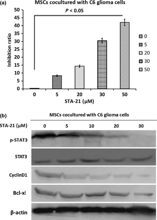 Effect of inhibition of signal transducer and activator of transcription 3 (STAT3) by STA-21. (a) Mesenchymal stem cells (MSCs) cocultured with C6 glioma cells were treated with 0–50 μM STA-21 for 24 h then the cell proliferation inhibition rate was analyzed using MTT. (b) Western blotting data showed that the protein expression levels of STAT3, p-STAT3, CyclinD1, and Bcl-xl in STA-21-treated groups were significantly increased compared to the group without STA-21 treatment.