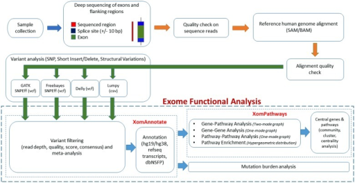 Schematic diagram of xomannotate component of iomics ex open i schematic diagram of xomannotate component of iomics exome data analysis platforme diagram shows four ccuart Image collections