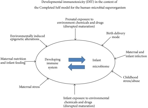 "This figure depicts a model following the ""Completed Self"" paradigm [91] in which the immune system and infant microbiome need to comature without interference or disruption to reduce later-life health risks. The categories of environmental risk factors reported to cause prenatal and/or postnatal disruption are illustrated."