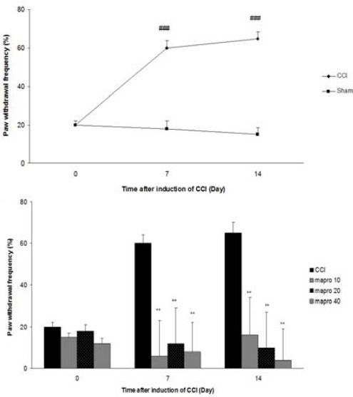 Cold allodynia after CCI, (A) Time course of cold allodynia (B), Effect of maprotiline (10, 20 and 40 mg/kg IP) on cold allodynia The results are expressed as Mean ± SEM, ###P<<0.001 versus sham group, **P<<0.01 versus CCI group. n=6 in all groups