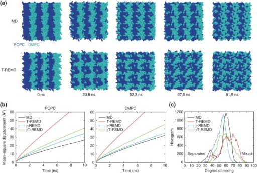 REMD simulations of POPC/DMPC mixed lipid bilayers. (a) Snapshots in the MD simulation at T = 303.15 K and P = 1 atm (upper panels), and snapshots in the T-REMD simulation at T = 303.15 K and P = 1 atm (lower panels). POPC and DMPC are coloured by blue and cyan, respectively. Structures in unit and image cells are shown together. (b) Mean-square displacements (MSD) of POPC lipids (left panel) and DMPC lipids (right panel) in MD, T-REMD, γ-REMD, and γT-REMD. MSD is computed for each replica and averaged over all replicas. (c) Histogram of degree of mixing (number of POPC–DMPC contact pairs) at T = 303.15 K and γ = 0 dyn/cm in MD, T-REMD, γ-REMD, and γT-REMD.