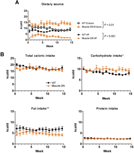 Nutrient intake of HF plus Ensure® diet in Muscle-DN mice. (A) Raw caloric intake by dietary source, 59% HF diet or Ensure®, from data used for computational modeling of intake shown in Figure 2A. (B) Total, carbohydrate, fat or protein caloric intake from combined HF plus Ensure® diets. Note that although total intake is similar, mutant mice consume relatively more calories from Ensure® and less from HF diet than do WT mice. This causes a difference in carbohydrate and fat intake between genotypes. n = 5-6 per group. Statistical significance by repeated measures ANOVA between genotypes for total HF or Ensure® intake (A) as indicated or for macronutrient intake (B) where *P < 0.05 and **P < 0.01.