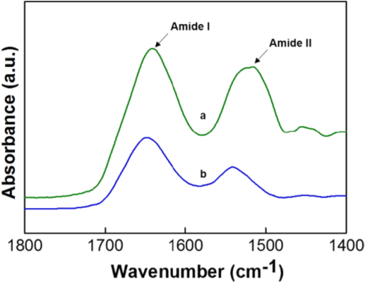 FTIR spectra of pure lysozyme (a) and lysozyme loaded on FDU-12-H200 (b).
