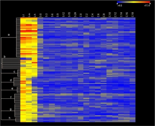 Heat map of the expression of 91 growth-specific genes.Genes expressed at levels >2× corrected background (see Figure 5A) are included. Clustering done using ArrayStar 2 (Clustering type: K-mean, Distance metric: standard Pearson). The heat map uses colors to display the relative values of all tiles within a given experimental condition wih blue indicating low expression, yellow indicating intermediate expression and red indicating high expression. The numerical values give the actual values on a log 2 scale that are associated with each color. Stages are as described in Materials and Methods. The color scale is shown by the bar at the top right corner of the figure.