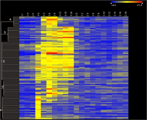 Heat map of 90 starvation-specific genes.Genes expressed at levels >2× corrected background (see Figure 5A) are included. Clustering parameters, conditions and other symbols are as in Figure 6.