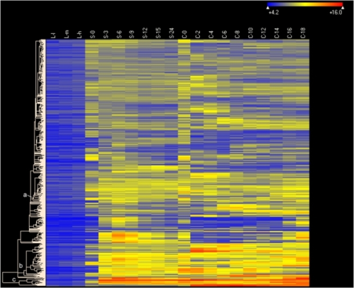 Heat map of 706 genes expressed during both starvation and conjugation but not during growth.Genes whose maximum expression levels during starvation and conjugation were >2× corrected background, and were less than 1× corrected background during growth, were included, Clustering type: Hierarchical, with Euclidean distance metric. Software, conditions and other symbols are as in Figure 6.