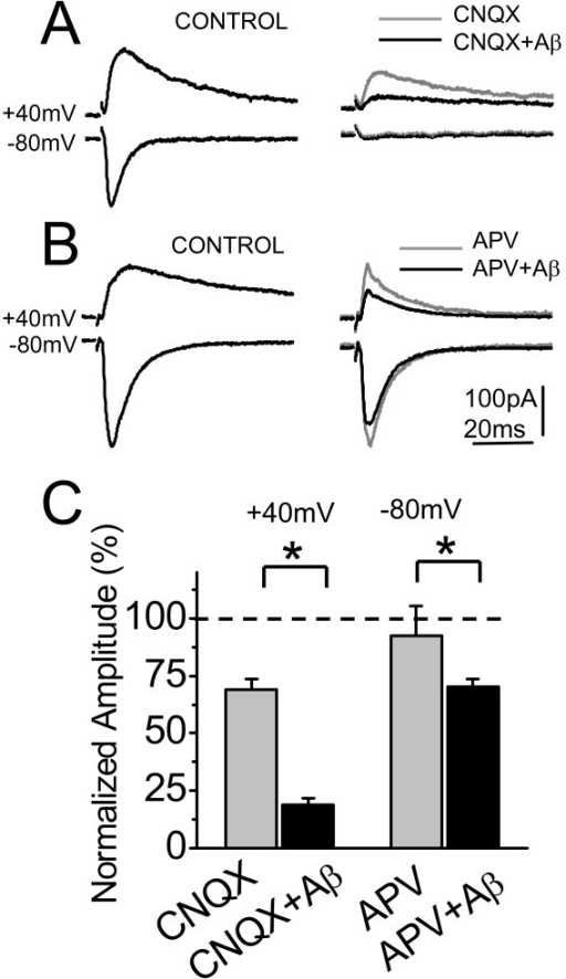 Aβ oligomers decrease mainly the NMDA current. (A) Average (20 sweeps) EPSCs in control (left), after treatment with CNQX (gray trace) or CNQX plus Aβ oligomers (black trace) (right) at -80 and +40 mV of holding potential obtained from a same neuron. B) Average (20 sweeps) EPSCs in control (left), after treatment with APV (gray trace) or APV plus Aβ oligomers (black trace) (right) at -80 and +40 mV of holding potential. C) Summary data of normalized amplitude (to control) of evoked EPSCs obtained from experiments on A (n = 6) and B (n = 5). Bar represents the mean ± SEM (*p < 0.05 Student's t test).