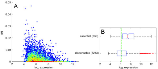 Gene expression correlates with substitution rate and gene essentiality. A) Nonsynonymous substitution rate dN (coding sequences averaged for all 36 strains) versus the expression level. Color indicates the density of data points ranging from blue (single data point) to deep red. B) Boxplots of gene expression levels grouped by gene essentiality as annotated in the Database of Essential Genes [29]. Boxplots indicate 0.25 and 0.75 quantiles and the median (red line) with notches giving an estimate for the variance of the median. The green dashed line indicates the median dN for all genes.