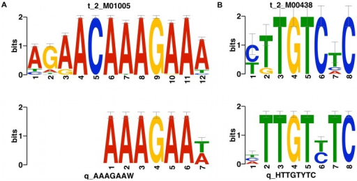 Two sequence motifs from intergenic ncRNAs with significant similarity against known DNA motifs.For each comparison, the upper one is the known DNA motif, and the lower one is the intergenic ncRNA sequence motif.