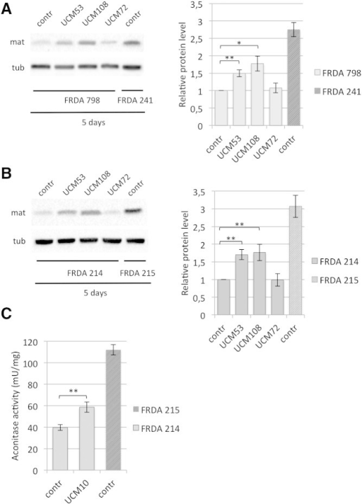 UCM promote frataxin accumulation in FRDA cells and rescue the aconitase defect.FRDA patients-derived lymphoblasts cell lines FRDA 798 (A) and FRDA 214 (B) or lymphoblasts derived from the corresponding unaffected carrier siblings, FRDA 241 or FRDA 215, respectively, were cultured in the presence of 10 μM of the indicated UCM, or DMSO alone (contr) for 5 days. Total cell extracts were resolved on SDS–PAGE and analyzed with anti-frataxin antibody, or anti-tubulin, as a loading control. The graphs represent the relative frataxin abundance as quantified by densitometric analysis and normalized with tubulin levels. Data represent the mean ± SEM from four different independent experiments. P-values were calculated with Student's t-test and were statistically significant (*P < 0.05; **P < 0.01) compared to non-treated conditions. Tub: tubulin; mat: mature frataxin. (C) Patients-derived lymphoblasts FRDA 214 were cultured with DMSO alone (contr) or in the presence of 10 μM of UCM108 for 5 days. The unaffected carrier siblings FRDA 215 lymphoblasts were cultured with DMSO alone. Total aconitase activities were measured and normalized as described in the Methods section. Data represent the mean ± SEM from four different independent experiments. P-values was calculated with Student's t-test and was statistically significant (**P < 0.01) compared to non-treated condition.