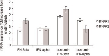 Modulation of IFNAR by curcumin. Quantitative real-time PCR was used to assess IFNAR mRNA expression in PHA/IL-2 T cell blasts. Both IFN-β (10 ng/ml) and IFN-α (10 ng/ml) slightly increased IFNAR1 expression; this induction was increased following prior exposure to curcumin. Prior exposure to curcum-in (20 μg/ml) also increased a moderate induction of IFNAR2 by IFN-β. Although IFN-α alone increased IFNAR2 expression, prior exposure to curcumin (20 μg/ml) decreased IFN-α induced IFNAR2 expression. β2microglobulin expression was monitored as an internal standard on the cDNA template; mRNA expression for each gene is normalized to the internal standard expression. US = unstimulated.