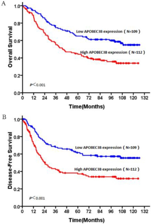 OS and DFS curves of patients with NSCLC based on their AP3B expression. (A) OS curves: all patients with low and high AP3B expression levels. (B) DFS curves: all patients with low and high AP3B expression levels.
