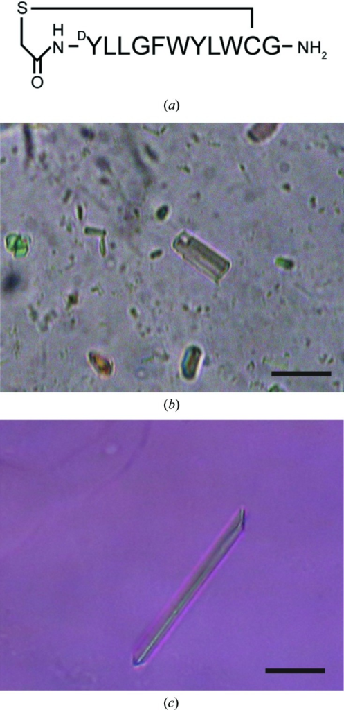 Crystals of VcmNΔC. (a) Schematic representation of the macrocyclic peptide. (b) Form A crystal. (c) Form B crystal. The scale bars represent 30 µm.