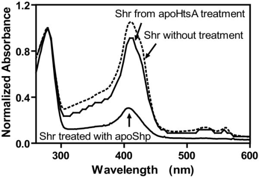 Inefficient heme transfer from Shr to apoHtsA. ApoHtsA or apoShp (75 μM) was incubated with 15 μM Shr in 0.1 ml of 20 mM Tris-HCl, pH 8.0, at room temperature for 2 min. Each sample was then loaded onto a 0.1-ml SP Sepharose column and eluted as described in the text. Presented are the normalized spectra of Shr without or with treatment with apoHtsA or apoShp. The normalization was done by setting A280 = 1.0.