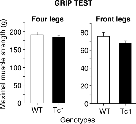 Grip force measurement in WT (white bars) and Tc1 (black bars) mice. The results represent the mean grip force (g) immediately prior to the animal releasing its grasp from the grid (see Methods). No difference was observed between Tc1 and WT mice either for four paws or for front legs, indicating normal muscles strength in Tc1 mice. Values represent means ± S.E.M.