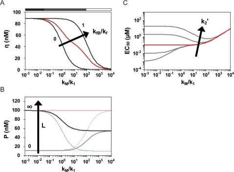 Rate competition dictates riboswitch performance.The relative values of the reversible and irreversible rate constants generally establish three operating regimes: thermodynamically-driven (▪) when reversible rate constants dominate, kinetically-driven (▪) when the rate constants are balanced, and non-functional (□) when irreversible rate constants dominate. Regimes are qualitatively marked for dynamic range and basal and ligand-saturating levels according the ratio of the rate constants for terminator stem formation (kM) and the progression from conformation A to conformation B (k1). Effect of varying kM on (A) dynamic range, (B) basal protein levels and ligand-saturating protein levels, and (C) EC50 for riboswitches functioning through transcriptional termination. In (B), colored pairs show basal (light) and ligand-saturating (dark) protein levels for complete (red), balanced (black), and negligible (blue) transcriptional folding into conformation B. Parameter values for all curves in (A) and (B) and the red curve in (C): k1 = 10−1/s;k1′ = 10/s; k2 = 106/M·s; k2′ = 10−1/s; KA = kP·kMA/kM = 10−3/s; KB = kP·kMB/kM = 10−2/s; kf = 10−11 M/s; kdP = 10−3/s.