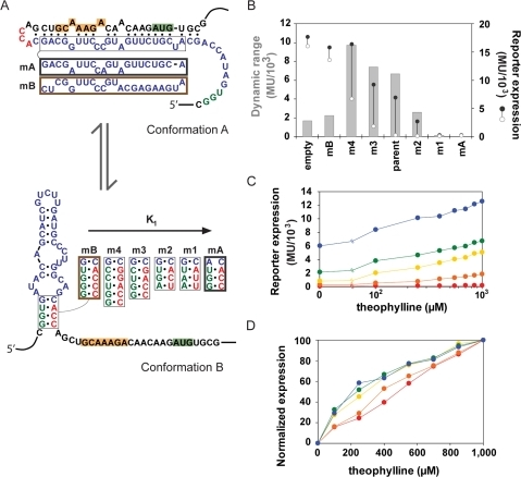 Mutational analysis of a synthetic riboswitch supports model predictions.(A) Mutations made to the aptamer stem of the parent synthetic riboswitch (m1–4) are anticipated to solely modulate conformational partitioning (K1). The theophylline-responsive riboswitch controls Tn10-β-Galactosidase levels through RBS sequestration, thereby repressing translation. Mutations were also introduced to lock the riboswitch in either conformation A (mA) or conformation B (mB). The RBS and start codon are highlighted in orange and green, respectively. (B) β-Galactosidase assay results are reported in Miller Units (MU) for each riboswitch variant in the presence (•) or absence (○) of 1 mM theophylline. Dynamic range (η) is calculated as the difference between high and low expression levels, where all values were below the theoretical maximum of 15,600 MU as determined by the difference between mB with theophylline and mA without theophylline. The positive control construct (empty) harbors only the RBS and aptamer basal stem. A slight increase in β-Galactosidase activity was observed in the presence of theophylline for the control construct. (C,D) Theophylline response curves for riboswitch variants: parent (yellow), m1 (red), m2 (orange), m3 (green), and m4 (blue). (C) Raw data and (D) normalized data illustrate the predicted shift in both basal levels and EC50 for increasing stabilization of conformation B. Data represent independent measurements of triplicate samples, where the standard error was below 5% of each mean value.