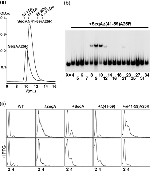Characterization of the SeqAΔ(41–59)-A25R mutant. (a) Elution profiles of SeqA-A25R (20 315 Da) and SeqAΔ(41–59)-A25R (18 513 Da) over a Superdex-75 size exclusion chromatography column (GE Healthcare). Elution volumes of albumin (67 kDa), ovoalbumin (43 kDa), chymotrypsinogen A (25 kDa) and ribonuclease A (13.7 kDa) are indicated. (b) Electrophoretic mobility shift assay of SeqAΔ(41–59)-A25R with DNAs containing two hemimethylated GATC sequences separated by a variable number of base pairs (X). The left-most lane contains an equimolar mixture of DNAs with 5, 7, 12, 21, 25 and 34 base pairs between the two GATC sites but no protein. (c) From left to right, flow cytometry profiles of a wild-type strain, the ΔseqA::tet strain and the ΔseqA::tet strain transformed with pET11a plasmids encoding wild-type SeqA, SeqAΔ(41–59), and SeqAΔ(41–59)-A25R. Wild-type SeqA and SeqAΔ(41–59) restore replication synchrony, however synchrony is lost upon protein over-expression. Conversely, SeqAΔ(41–59)-A25R only restores replication synchrony upon protein overexpression by addition of 25 μM IPTG.