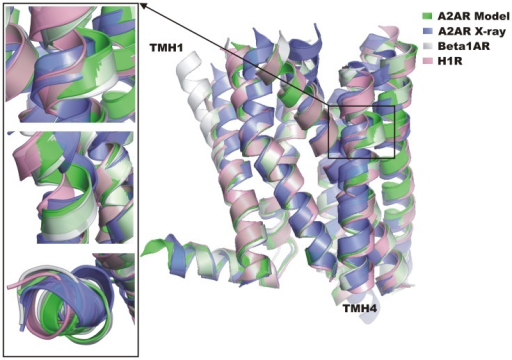 Multiple template modeling of A2AR.The model (green) was generated by GPCRM and is superposed on the crystal structure (blue) and templates used in the model building: the β1AR adrenergic receptor (grey) and the histamine H1R (pink). The bulge observed in TMH4 in β1AR is properly transferred to the A2AR model. Additionally, incorporation of the second template (H1R) improves the kink of TMH1 in the A2A model. The TMH4 bulge can be examined in details in pictures taken from different angles presented on the left.