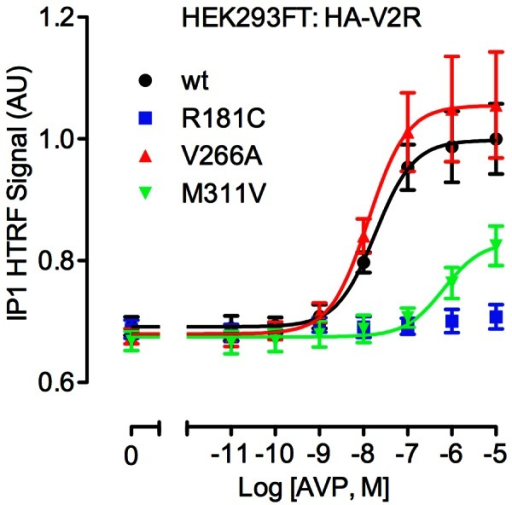 AVP-induced IP1 accumulation.Transfected HEK293FT cells expressing either wild-type or mutant HA-tagged V2R were treated for 30 minutes with the indicated concentrations of AVP. Following additions, cells were lysed and IP1 accumulation measured by HTRF. Data shown are HTRF signal in arbitrary units (AU) normalized to the wild-type receptor response. Results shown are the mean ± SEM of 5 independent experiments.