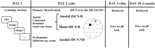 Timeline of experiment. Older adults learned 20 words on Day 1. On Day 2 (24 h later), they received a reminder or not, and after 10 min tDCS was applied over the left DLPFC. Memory retrieval (free recall) was tested on Day 3 (48 h later) and Day 30 (1 month later).