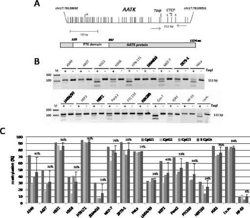 Hypermethylation of AATK in human cancersA. Structure of the AATK CpG island promoter on chromosome 17 and the AATK protein. Arrows mark transcriptional (+1) start site for AATK. Vertical lines indicate CpGs. The 111 bp PCR product with respective primers and the TaqI site are depicted. The CTCF binding site is shown. The protein tyrosine kinase (PTK domain) of AATK is marked. B. Combined bisulfite restriction analysis of AATK. Bisulfite-treated DNA from the indicated cancer cell lines, human fibroblasts (HF-55) and in vitro methylated DNA (i.v.m.) was amplified, digested with TaqI (+) or mock digested (−) and resolved on 2% gels with a 100 bp marker (M). C. Bisulfite pyrosequence analysis of AATK. The methylation levels of three CpGs of the PCR products were analyzed by pyrosequencing.
