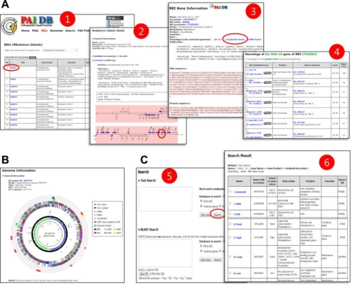 Screenshots of new functional features in PAIDB v2.0. (A) Pages for REIs: 1. a list of REIs; 2. information on the clicked REI; 3. information on the clicked gene; 4. homologs of the selected gene in known virulence genes from PAIDB and VFDB, and known resistance genes from PAIDB, CARD and BacMet. (B) Circular map showing candidate regions of a selected genome. (C) Text and BLAST searches: 5. users can select a database in which to search their text or sequence input; 6. homologs in the BLAST results table are linked to their detailed information (2 and 3). Items clicked on each page that generated the next page are marked in red circles.