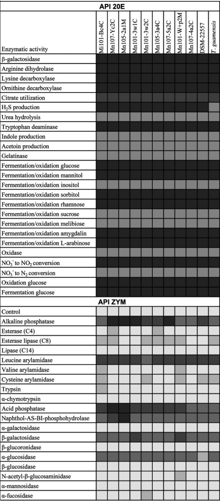 (Top) Results of API 20E enzyme activity assays for 11 Trabulsiella strains. Dark gray, positive result; light gray, negative result. Activity for citrate utilization (medium gray) was not clear. (Bottom) Results of API ZYM enzyme activity assays for 11 Trabulsiella strains. On the five-point scale, scores of 1 and 2 (two lightest gray shades) are considered negative, while scores of 3 to 5 are considered positive (three darkest gray shades), with increasing enzyme activity.