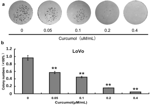 Curcumol inhibited human colorectal cancer cell viability. (a) Cell colony formation was evaluated by clonogenic assay; and (b) Statistical results of colony-forming assays presented as surviving colonies (percentage of untreated control). Data are expressed as mean ± SD from at least three independent experiments, **p < 0.01 when compared with the untreated control group.