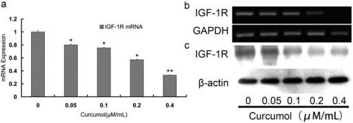 Curcumol down-regulated the expression of IGF-1R in human colorectal cancer cells. The mRNA expression of IGF-1R was detected by real-time PCR (a) and RT-PCR (b); (c) The expression of IGF-1R was analyzed by Western blot. Cells were treated with curcumol for 48 h, and total proteins were extracted. Equal protein loading was evaluated by β-actin. Data are represented as means ± S.D. from at least of three independent experiments. *p < 0.05, **p < 0.01 when compared with the untreated control group.