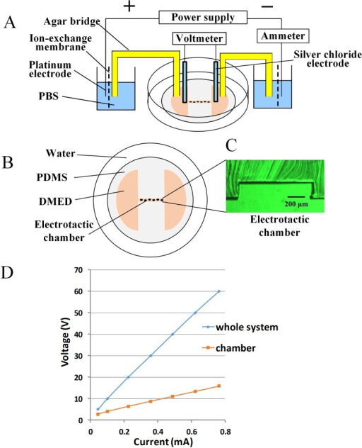 System For Electrotaxis Experimentsa Schematic Drawi Open I
