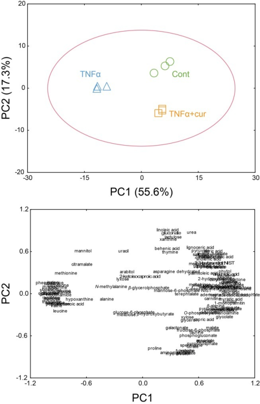 PCA score (A) and loading plots (B) of RA fibroblast-like synoviocytes (FLS), which were not stimulated (Control), stimulated with TNF-α (TNF), and treated with curcumin (Curcumin).(A) Principal component (PC)1 explained the significant separation of metabolite profiles between the TNF-α-stimulated group on the negative region of the PC1, and the control and curcumin-treated groups on the positive region of the PC1. Further, the control group was clearly separated from the curcumin-treated group on PC2. (B) PC1 was explained by 84 metabolites that correlated positively with the axis, and 35 metabolites that correlated negatively.