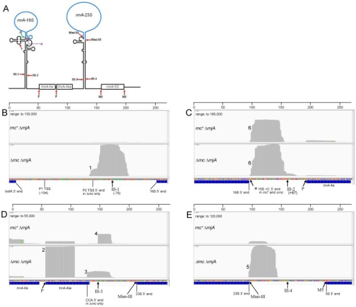 PMC4838370_gkw073fig6 pare analysis of ribosomal rna (a) schematic diagram o open i