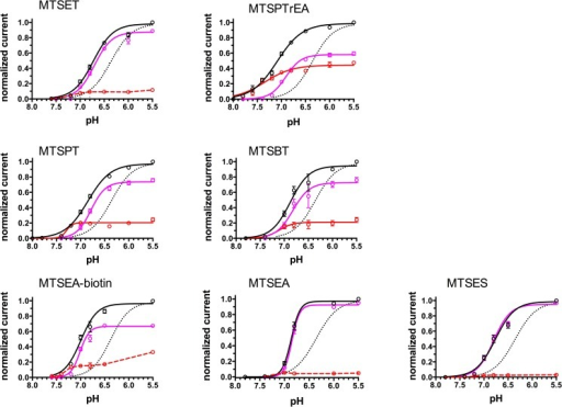 pH-dependence of activation of ASIC1a-G430C currents after channel modification by MTS-reagents.Currents recorded in oocytes expressing ASIC1a-G430C and incubated beforehand with MTSET, MTSPTrEA, MTSPT, MTSBT, MTSEA-biotin, MTSEA, MTSES (100 μM) during 10 min. at pH 7.8. Currents are elicited by acidic pH changes ranging from 7.8 to 5.5. Black circles and black solid lines represent the total inward current, pink circles and lines represent the desensitizing current (Idesens), red circles and lines the sustained current (Isust). The lines represent the best non-linear fit for the pH-dependence of current activation. For comparison, the dashed line represents the pH dependence of activation of ASIC1-G430C without pre-incubation with MTS-reagents obtained from data shown in S2 Fig. Each current value was normalized for the maximal total inward current elicited at pH 5.5. Each symbol represents the mean ± SE of 10 to 53 measurements.