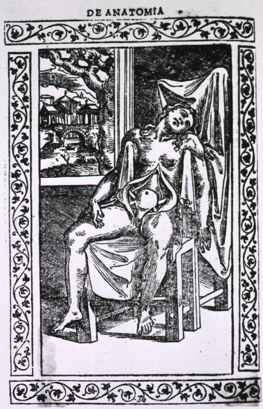 <p>Full length view of female figure seated in a chair; abdomen exposed with uterus displayed.</p>